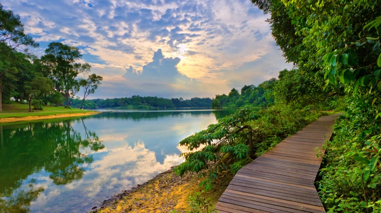 MacRitchie Reservoir (Lonely Planet)